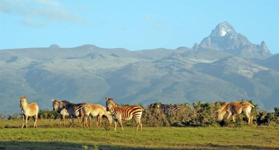 Mt-Kenya_wildlife