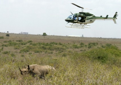 helicopter_wildlife_viewing